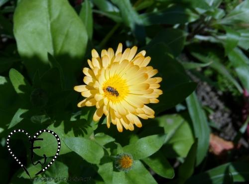 Sonnig gelb zieht auch Insekten an...
