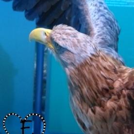 Auch zu unterschiedlichen Vögeln und anderen Tieren gab es reichlich Infos...