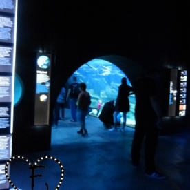 Sehr interessant: der Helgolandtunnel...
